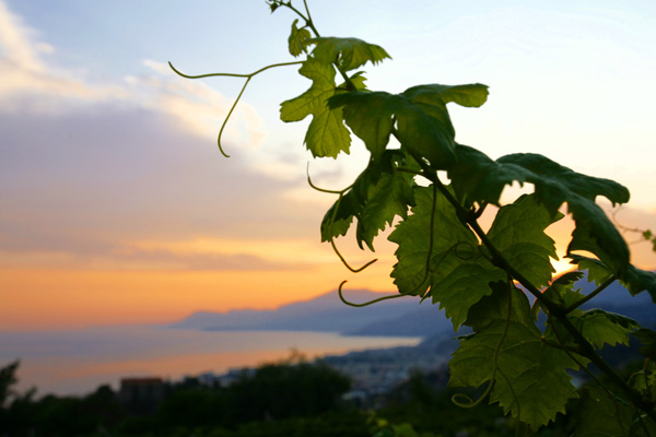 selvadolce vigneto al tramonto